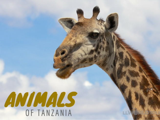 Animals of Tanzania