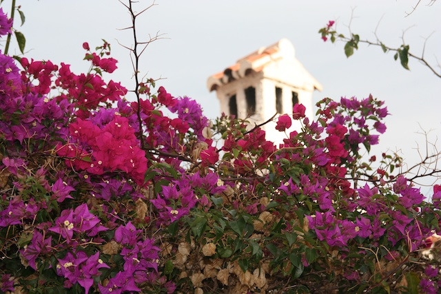 photo essay flowers of spring around the world spain bougainvillea