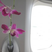 Orchids on Cathay Pacific