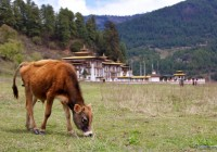 Bhutan: Trekking in the Bumthang Valley