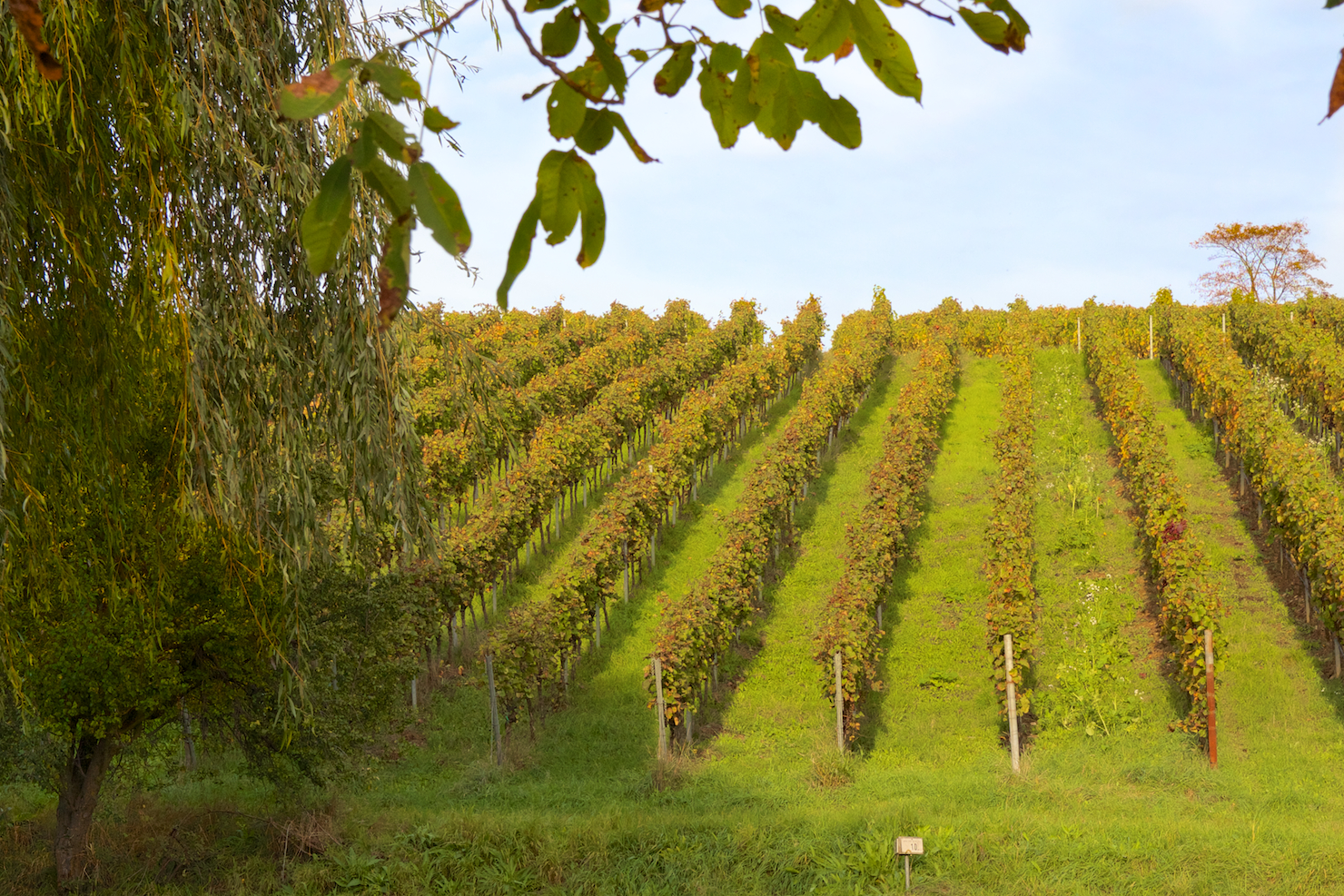 Pfalz Wine region