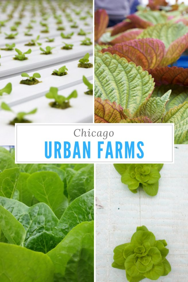 Urban Farms Chicago