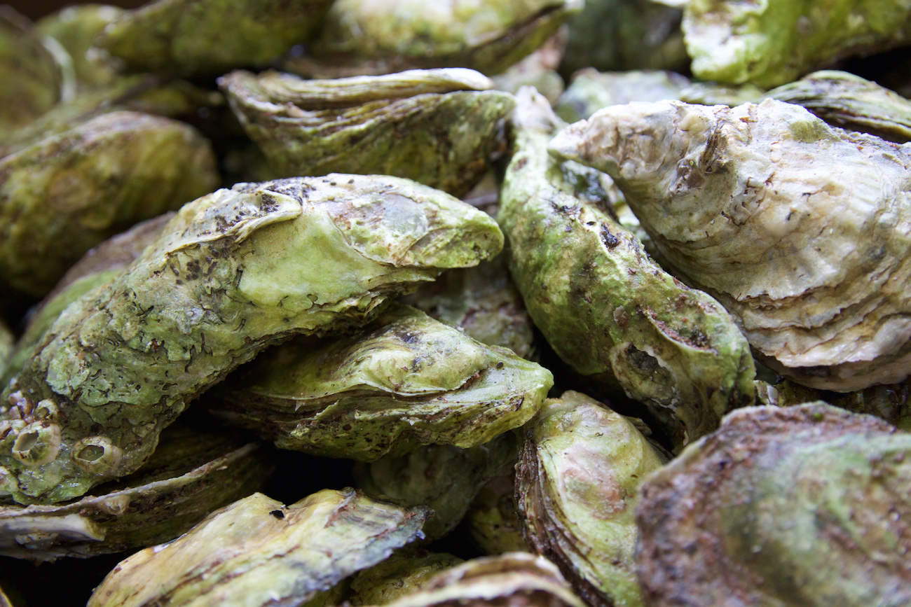 Colville Bay Oyster Co.