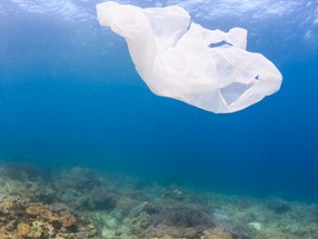 Plastic_Bag_Coral_Reef