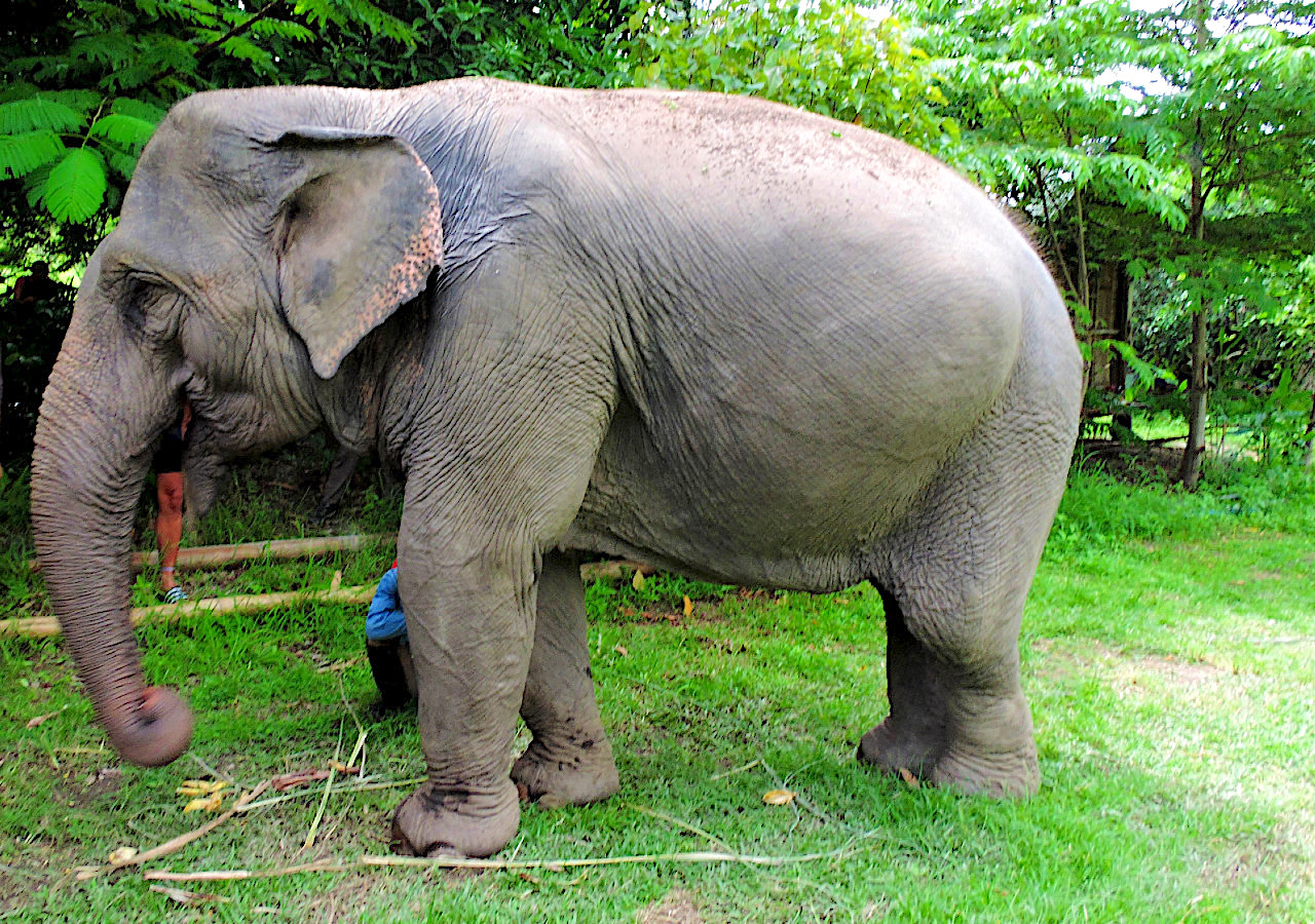 Ethical Animal Tourism - Conserve Natural Forests - Pai